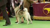 WKC Live Stream 2 - Hound Group February 13, 2012 9:12 PM