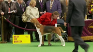 WKC Live Stream 2 - Hound Group February 13, 2012 9:22 PM