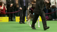 WKC Live Stream 2 - Hound Group February 13, 2012 10:06 PM