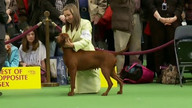 WKC Live Stream 2 - Hound Group February 13, 2012 10:40 PM