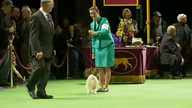 WKC Live Stream 2 - Hound Group February 13, 2012 11:20 PM