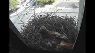 The Franklin Institute Hawk Nest www.fi.edu/hawks 4/21/12 03:38AM PST