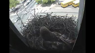 The Franklin Institute Hawk Nest www.fi.edu/hawks 4/21/12 11:59AM PST