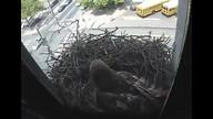 The Franklin Institute Hawk Nest www.fi.edu/hawks 4/21/12 11:59AM PST
