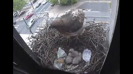 The Franklin Institute Hawk Nest www.fi.edu/hawks 4/27/12 12:04AM PST