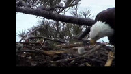 NextEra Maine Eaglecam1