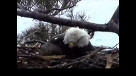 NextEra Maine Eaglecam: May 4, 2012_1235