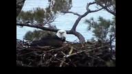 NextEra Maine Eaglecam1: May 8, 2012_1756