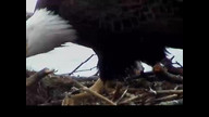 NextEra Maine Eaglecam1: May 9, 2012