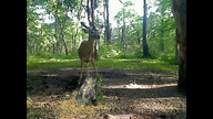 Buck 5-31-12