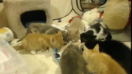 Delray Kitten Cam - Pearl Regulates