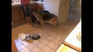 German Shepherd Rescue