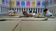 NSALA Puppy and Kitten Cam 6.28.12