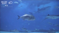 Shark Week's Shark Cam 2