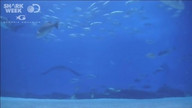 Shark Week;s Shark Cam 2 Replay