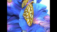 Butterfly emerging 7-17-2012