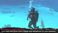 Diver answers questions inside shark tank