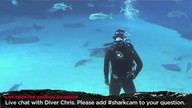 Live Chat with Diver Chris (Tuesday)