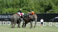 Elephants play polo at King's Cup