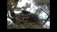 NextEra Maine Eaglecam: March 2, 2013