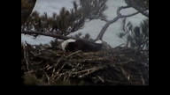 Brookfiled Maine Eaglecam: March 23, 2013_1725