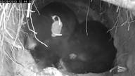 Black Bear Jewel's Den