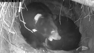 Black Bear Jewel's Den