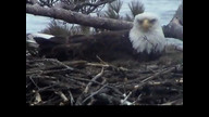 Brookfield Maine Eaglecam1: April 18, 2013