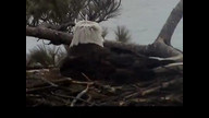 Brookfield Maine Eaglecam1: April 19, 2013