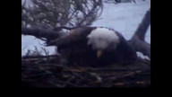 Brookfield Maine Eaglecam1: April 20, 3013_0708