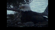 Brookfield Maine Eaglecam: May 3, 2013_1931
