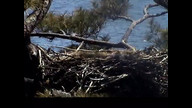 Brookfield Maine Eaglecam: May 7, 2013_1122