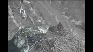 West End Bald Eagle Nest Cam 2
