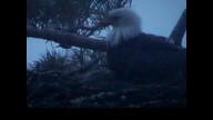 Brookfield Maine Eaglecam: May 12, 2013_1957