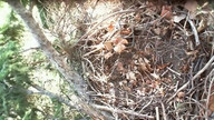 Ellis Bird Farm Owl Cam Top View