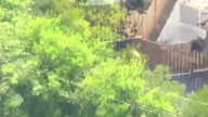 Bear causes panic in Californian neighborhood