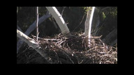 Sea-EagleCAM