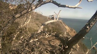 Pelican Harbor Bald Eagle Nest Cam
