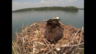 Smith Mountain Lake State Park Osprey Cam