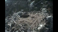 Two Harbors Bald Eagle Nest Cam