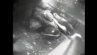 African Penguins, Underwater Cam