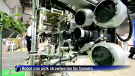 Japan robot can pick strawberries for farmers