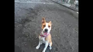 Lilly at the dog park