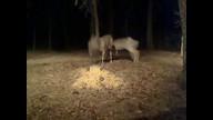 Two deer 6 am