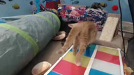 A Second Chance Rescue Kitten Cam