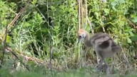 Rare African cranes born at Chester Zoo