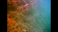 Florida Keys Fish - Underwater Camera 08/07/10 06:35PM
