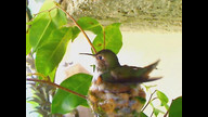 WORLD OF HUMMINGBIRDS! ourhummingbirdnest.com
