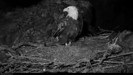 Two Harbors Eagles