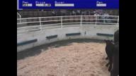 cow sale 4-22-16